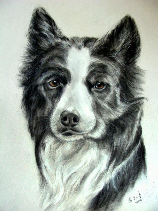 Hundebild gezeichnet, Pastellkreide