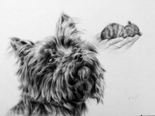 Hundeportrait als Collage gezeichnet, Kohle/Bleistiftzeichnunf