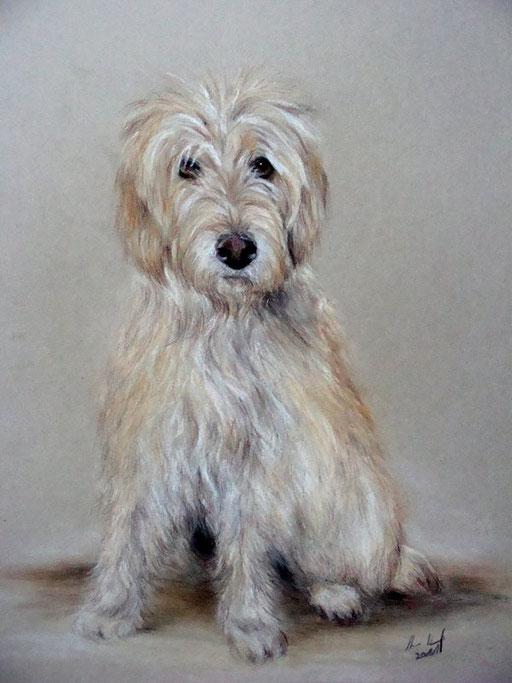 Hundeportrait, Hund sitzend