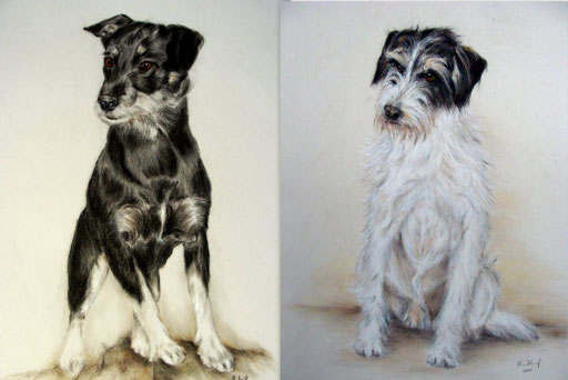 Hundeportraits Terrier