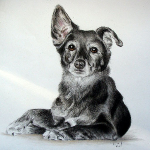 Hundeportrait Buntstift