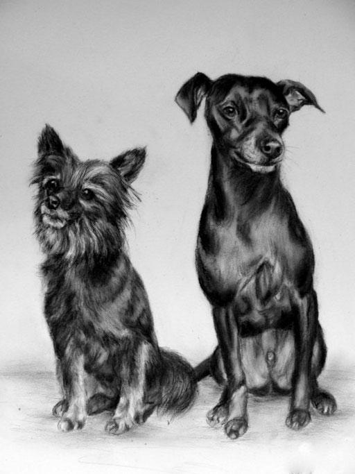 Hunde mit Bleistift und Kohle Gezeichnet