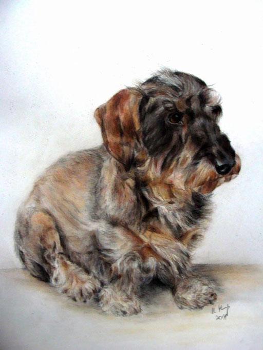 Rauhaardackel,Hundebild mit Pastellkreide gezeichnet