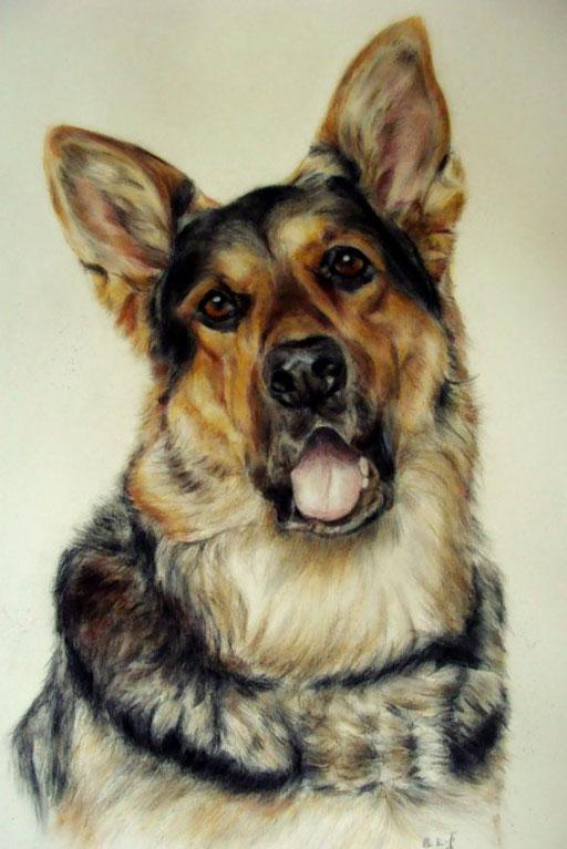 Hundeportrait, Schäferhund