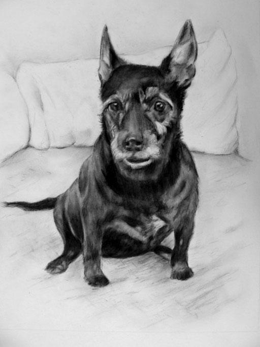 älterer Hundemischling mit Kohle und Bleistft gezeichnet