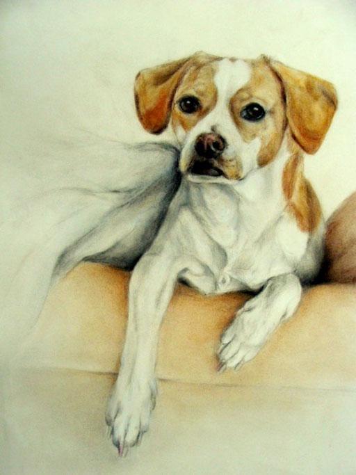 Hundezeichnung, junger Beagle