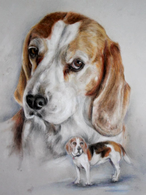 Hundeportrait Beagle