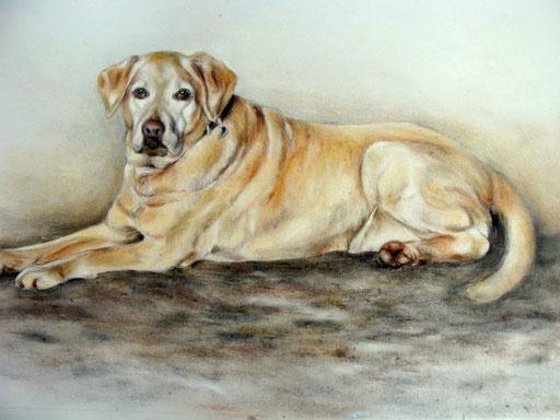Hundezeichnung Pastellkreide