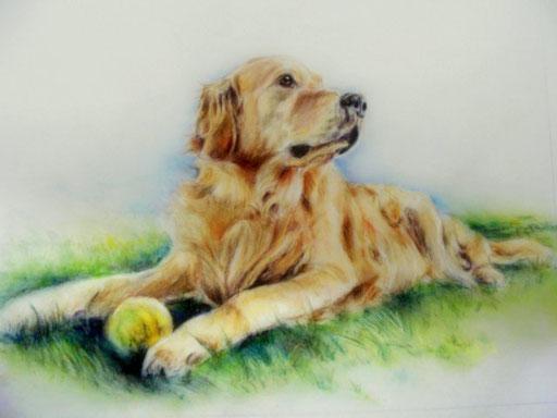 Hundeportrait mit Pastellkreide und Farbstiften gezeichnet