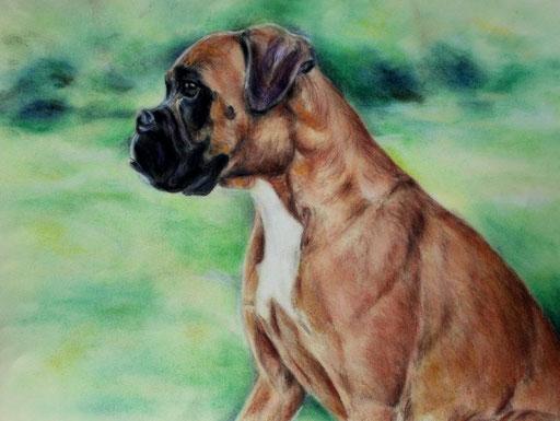 Hundeportrait eines Boxers mit Hintergrund gezeichnet