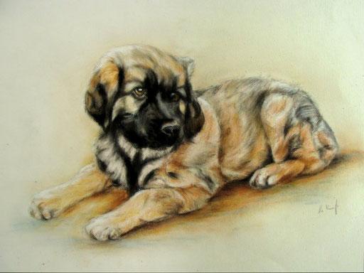 Hundewelpe mit Pastellkreide gezeichnet