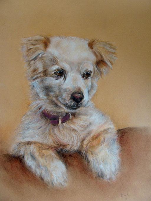 Mischlingshund aus dem Tierschutz