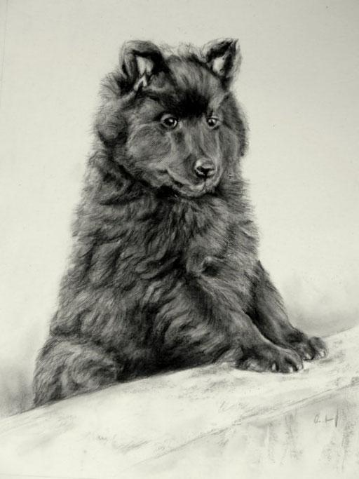 Hundezeichnung Welpe mit Bleistift und Kohle gezeichnet