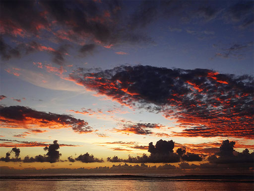 Sunset flamboyant