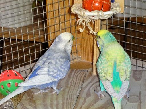 Monty und Flo