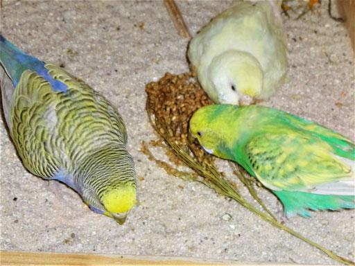 Tini, Flocke und Feli