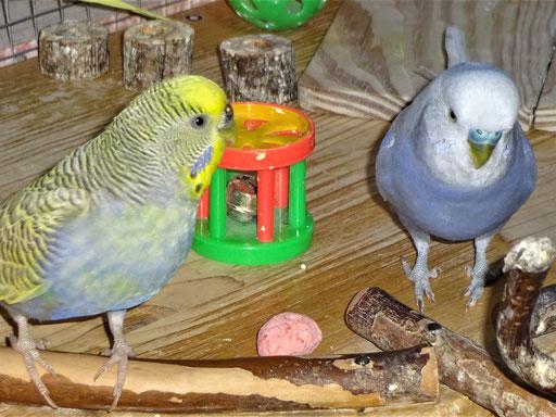 Tini und Monty ;-)