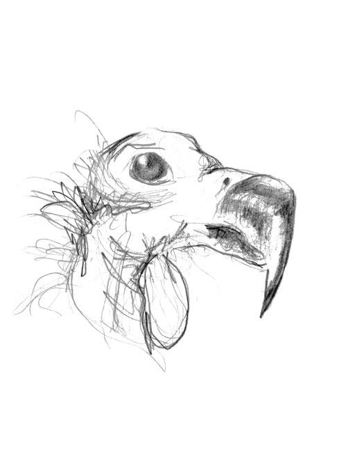 Zeichnung Bleistift  ca. A5 2015