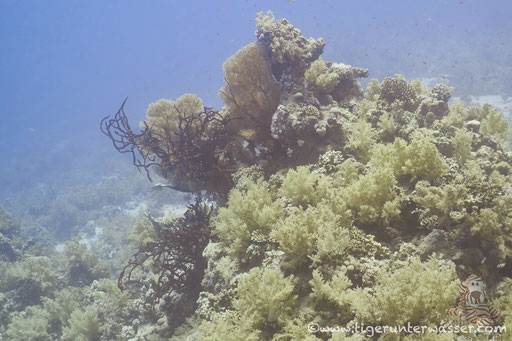 Panorama Reef - Safaga - Red Sea / Aquarius Diving Club