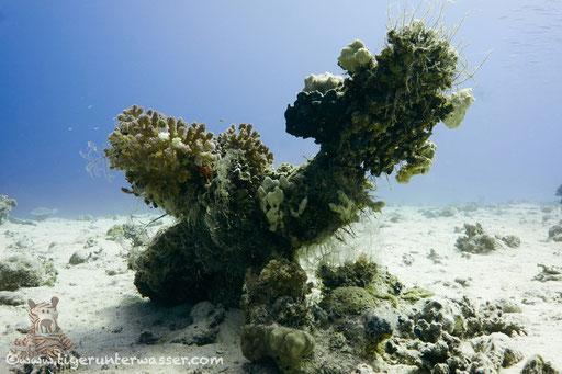 Fanadir Nord - Hurghada - Red Sea - Aquarius Diving Club