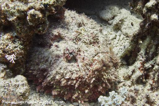 Disha - Makadi Bay - Red Sea / Aquarius Diving Club