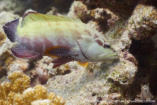 / Fanadir Nord - Hurghada - Red Sea / Aquarius Diving Club