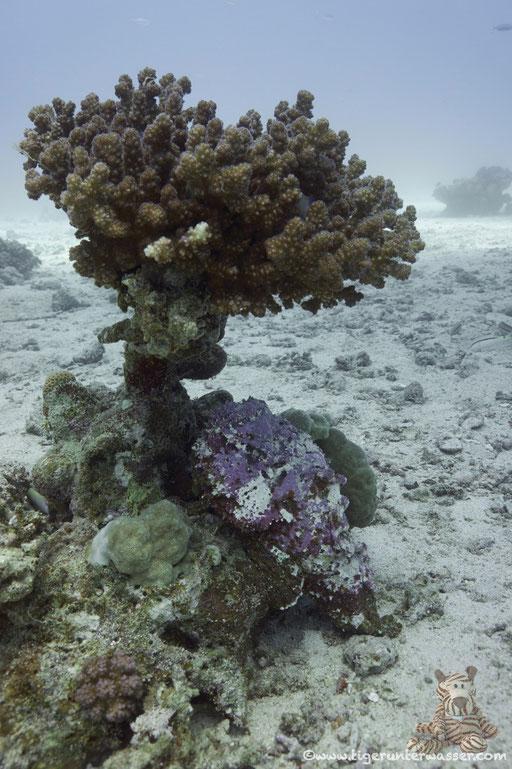 Erruogh - Hurghada - Red Sea / Aquarius Diving Club
