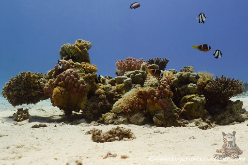 Ben El Gebal / Hurghada - Red Sea / Aquarius Diving Club