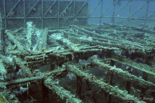 Mohamed Hasabella / Hurghada - Red Sea / Aquarius Diving Club