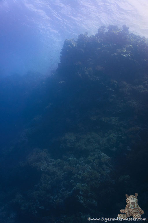 Daedalus - Red Sea / Aquarius Diving Club