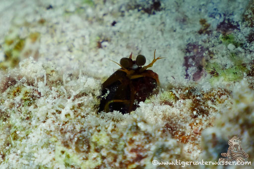 ??? / Erg Petra - Hurghada - Red Sea / Aquarius Diving Club