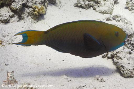 - Hurghada - Red Sea / Aquarius Diving Club