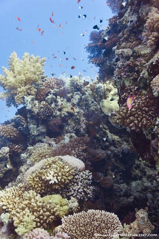 Erg Abu Ramada / Hurghada - Red Sea / Aquarius Diving Club