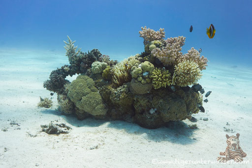 Erg Estha / Hurhada - Red Sea / Aquarius Diving Club