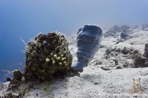 Sakhwat Abu Galawa / Hurghada - Red Sea / Aquarius Diving Club