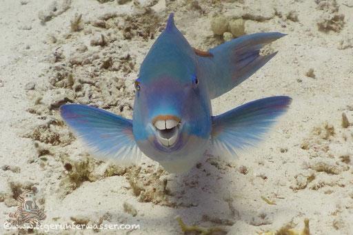 Banana Reef - Hurghada - Red Sea / Aquarius Diving Club