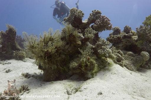 Abu Galawa Sogair - Hamata - Red Sea / Vita Xplorer