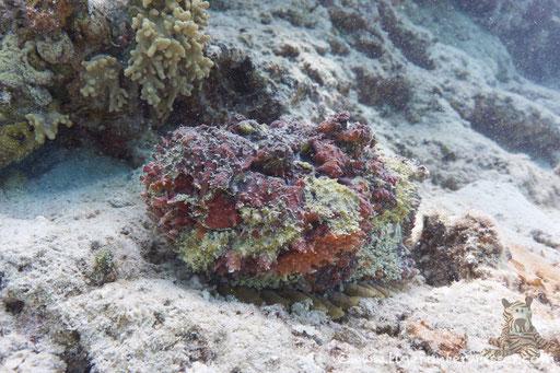 Marsa Abu Galawa - Hurghada - Red Sea / Aquarius Diving Club