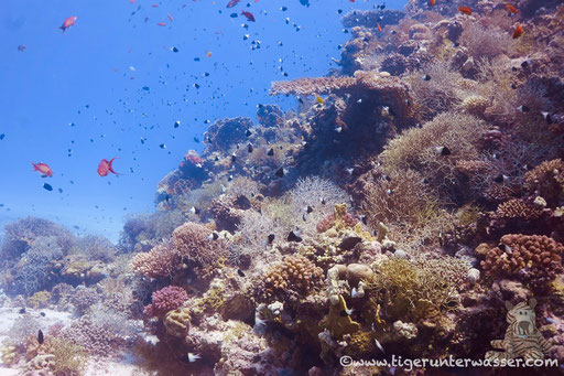 Errough / Hurghada - Red Sea / Aquarius Diving Club