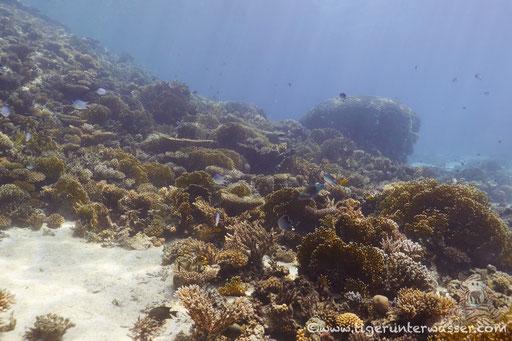 Shaab El Erg - Hurghada - Red Sea / Aquarius Diving Club