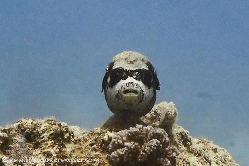 be cool../ Small Giftun - Hurghada - Red Sea / Aquarius Diving Club