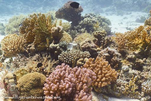 Erg Sabina - Hurghada - Red Sea / Aquarius Diving Club