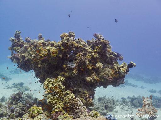 Abu Hashish Süd - Makadi Bay - Red Sea / Aquarius Diving Club