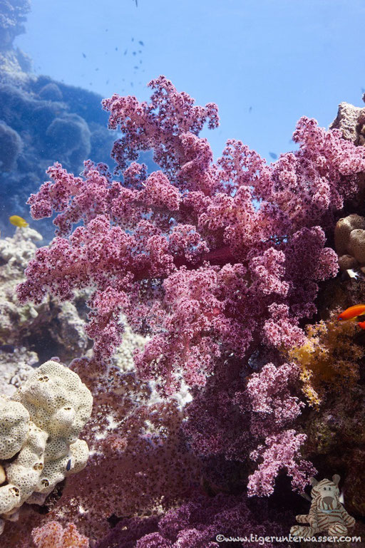 Erg Petra / Hurghada - Red Sea / Aquarius Diving Club