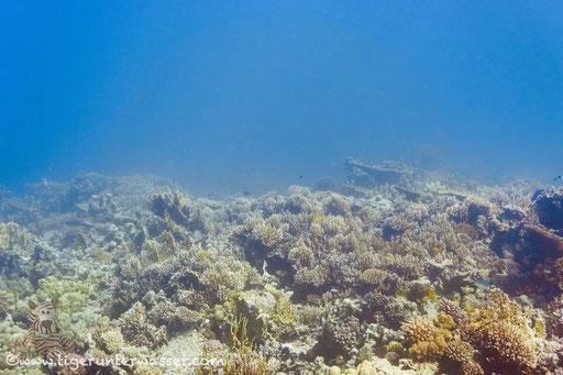 Habili Abu Nuger / Hurghada - Red Sea / Aquarius Diving Club