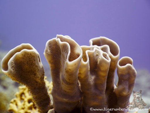 Small Giftun / Hurghada - Red Sea / Aquarius Diving Club