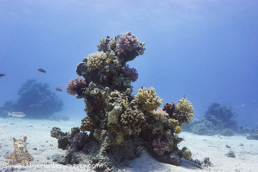 Erg Talata / Hurghada - Red Sea / Aquarius Diving Club