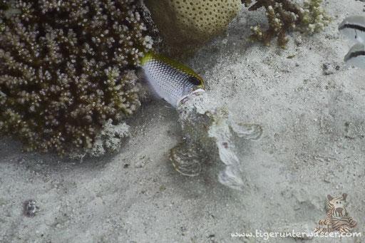 Erroug - Hurghada - Red Sea / Aquarius Diving Club