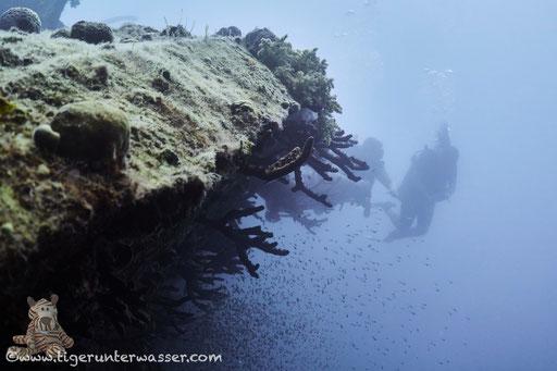 El Mina / Hurghada - Red Sea / Aquarius Diving Club