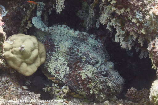 Abu Ramada Süd - Hurghada - Red Sea / Aquarius Diving Club
